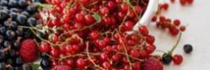 Удивительные свойства смородины