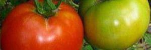 Могут ли овощи предотвратить рак груди