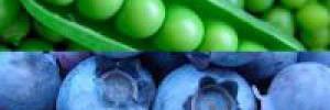 Атеросклероз: пора на диету