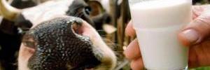 Эксперты выяснили, к чему приводит употребление молока