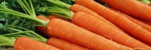 Врачи объяснили, действительно ли морковь улучшает зрение