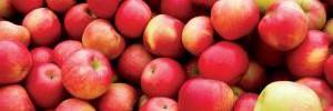 Свежие яблоки помогут организму согреться в холода — врач