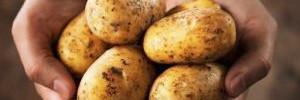 Неожиданно: картофель признали полезным продуктом