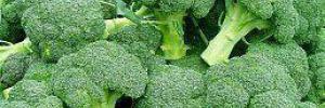 Антиоксидант из брокколи может лечить прогерию