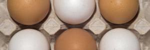 Употребление куриных яиц помогает младенцам развивать мозг