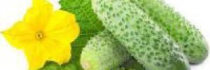 Овощи против авитаминоза