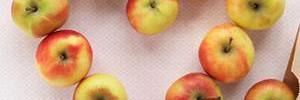 6 правил питания для плоского живота