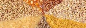 Чем хороша кукурузная каша