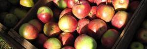 Безопасность продуктов питания с помощью blockchain: опыт IBM