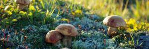 Медики рассказали, кому нельзя есть грибы