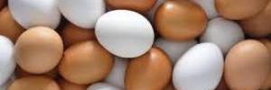 Диетологи раскрыли интересные факты о куриных яйцах