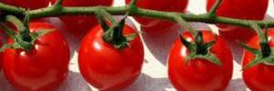 Овощная диета: это здорово