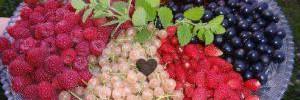 Полезные свойства маслин