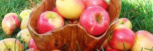 Развеян популярный миф о яблоках