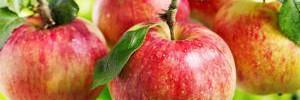 Названы продукты, спасающие организм от жары