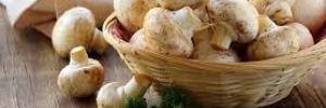 Эти популярные грибы являются средством защиты от смертельной болезни