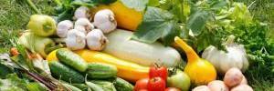Какие овощи помогут сохранить молодость мозга?