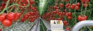 Полезны ли апрельские овощи?