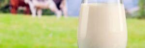 Врачи: коровье молоко более полезно, чем кокосовое и соевое