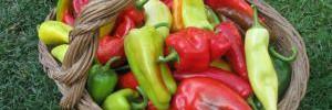 Ученые выбрали идеальный овощ для продления жизни