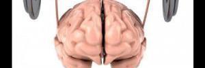 Эти продукты существенно повысят работоспособность мозга
