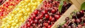 Черешня и вишня: кому нельзя есть и чем полезны эти ягоды