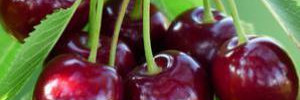 Диетологи назвали сезонный суперпродукт
