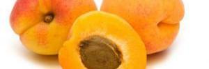 Названы уникальные свойства абрикоса