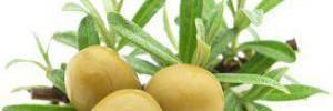 Ежедневное употребление оливок снижает риск многих заболеваний