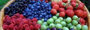 Диетологи назвали самые низкокалорийные фрукты и ягоды
