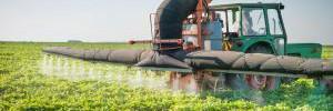 Эти простые способы помогут избавиться от пестицидов в овощах