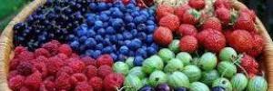 Врачи рассказали, когда ягоды могут навредить здоровью