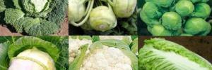 Врачи назвали самый полезный овощ для здоровья