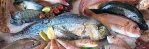 Морская пища замедляет старение 1