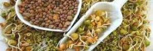 Проростки для здоровья: живая еда своими руками