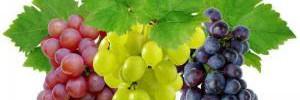 Обнаружено новое полезное свойство винограда