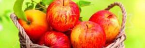 Полезные сойства яблок