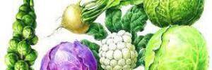 Польза овощей: капуста