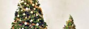 Ученые из Шеффилда научились делать сладости из новогодних елок