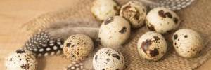 Чем вредны перепелиные яйца