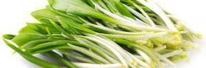 Первая весенняя зелень: 5 блюд из крапивы и черемши, которые оздоровят организм