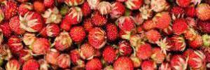 Названа ягода, которая очищает кровь и выводит токсины