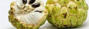 Черимойя – сладкий фрукт Южной Америки