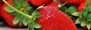 Эксперты рассказали, как правильно хранить ягоды
