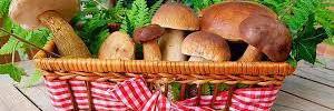 Включите грибы в свой рацион