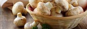 Оливье, шашлык и пельмени из шампиньонов: все о пользе самого доступного гриба