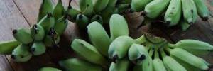 Полезны ли зелёные бананы