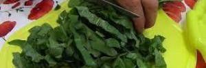 Весенний щавель: едим, лечимся и заготавливаем