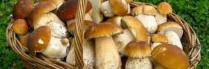 Три грибных блюда для идеального осеннего ужина