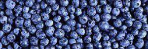 Черника защищает от последствий неправильного питания